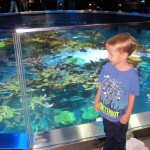 A tour throught the Aquarium