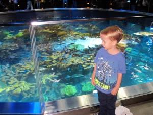 A tour throught the Aquarium